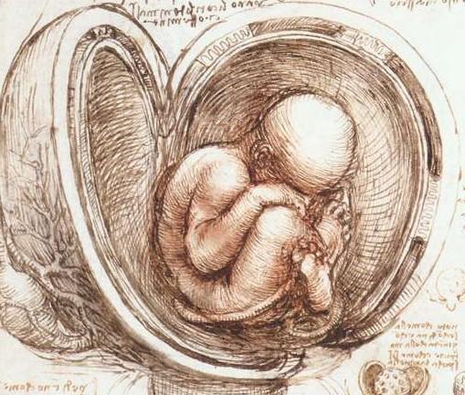 body-and-mind-embryo-leonardo-da-vinci